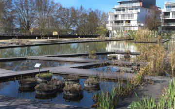 Jardin Botanique - Bassins